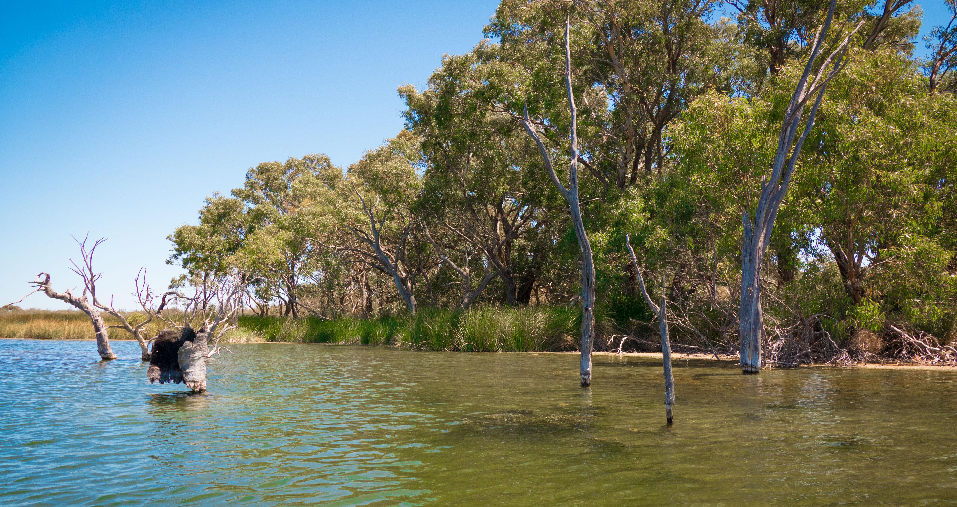 Lake Bidyanus