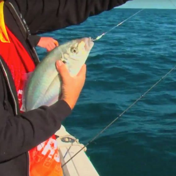 Perth Skippy or Silver Trevally