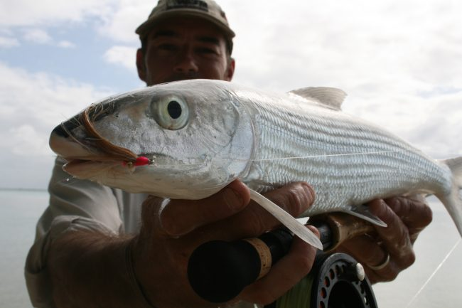 Cocos Islands Bonefish caught on fly