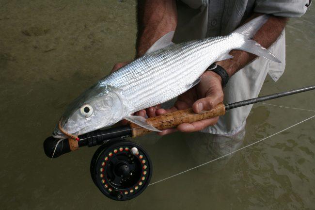 Cocos Island Bonefish