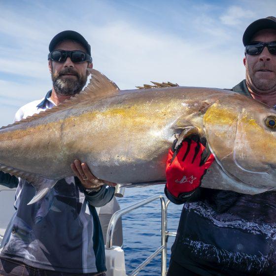 Big Perth Samsonfish
