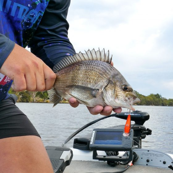 Ruan Ver Der Berg with a Swan River Bream caught on a Scout 45