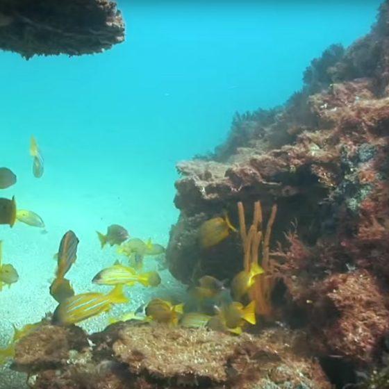 Underwater at the Mackerel Islands