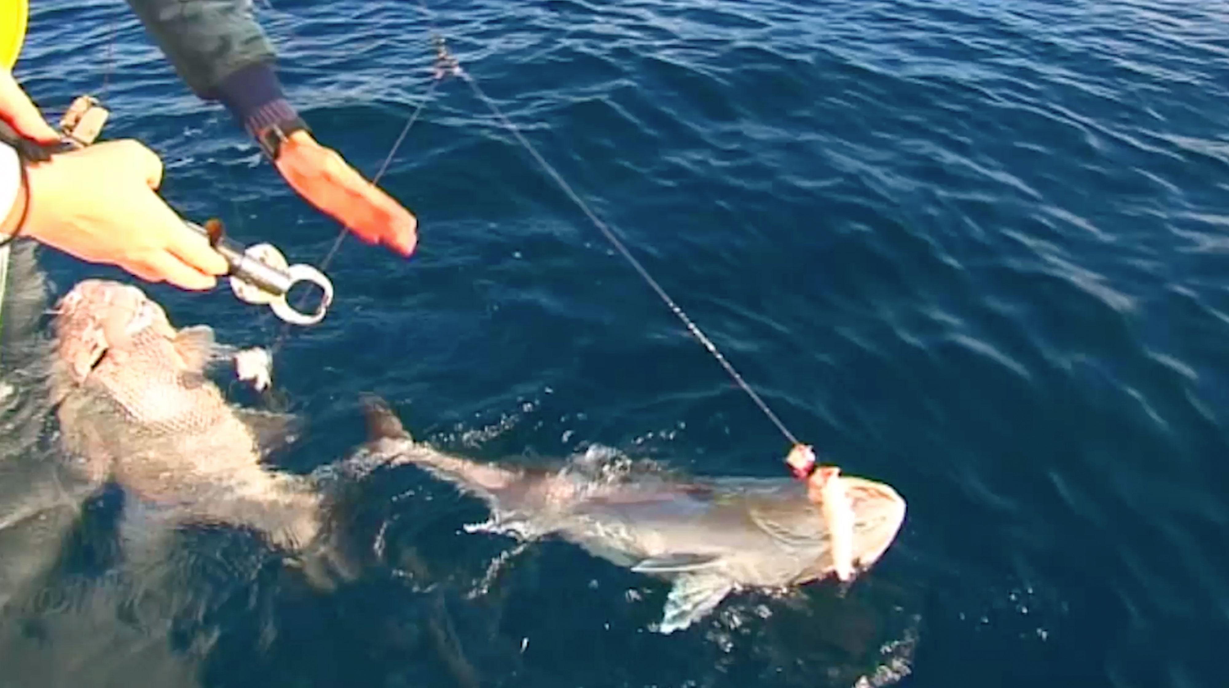 Jurien Bay Dhufish and Samsonfish Double Header