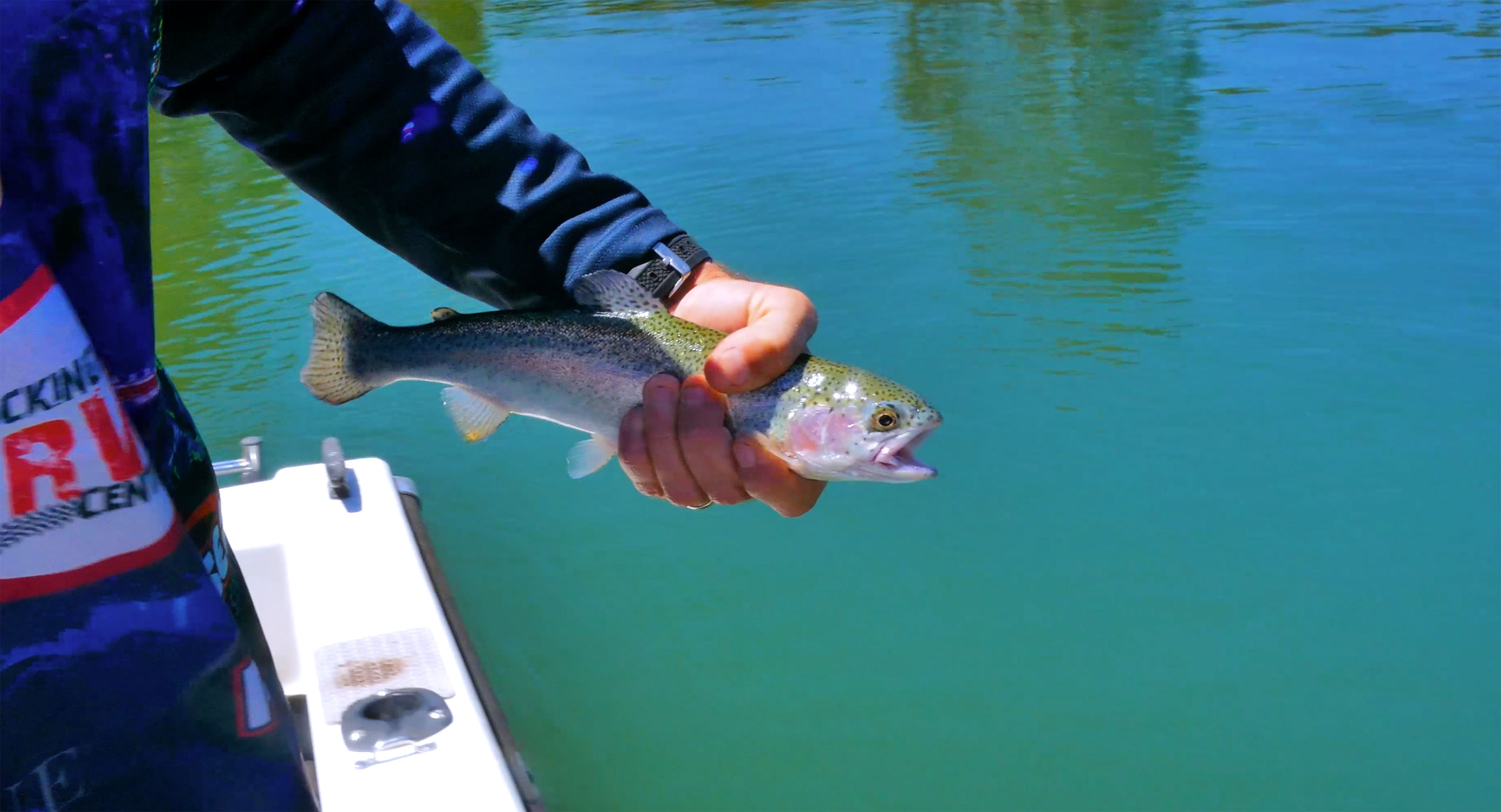 Rainbow Trout from Waroona Dam