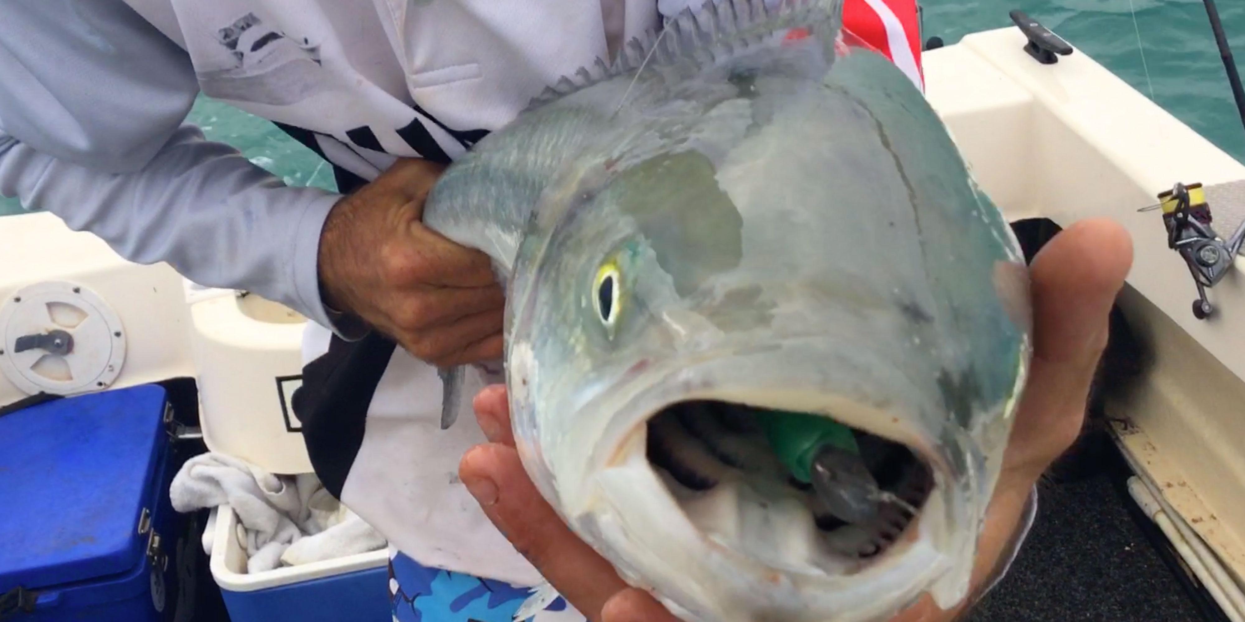 Australian Salmon caught on Soft Plastic Lure