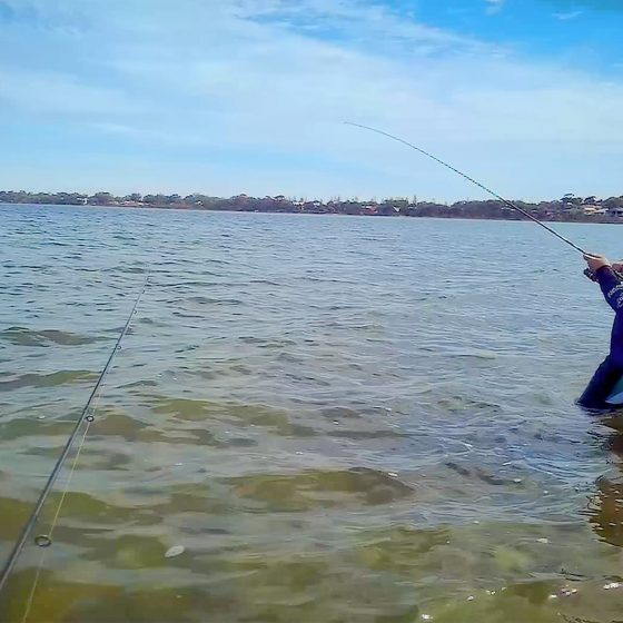 Catching King George Whiting