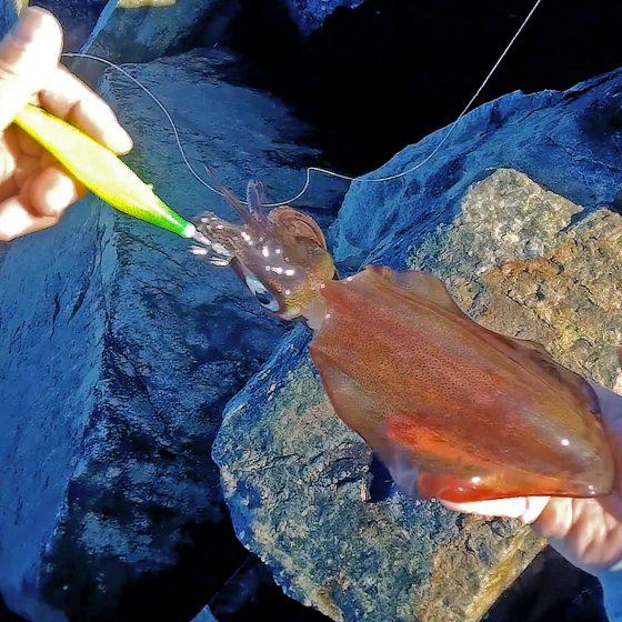 Fremantle Squid